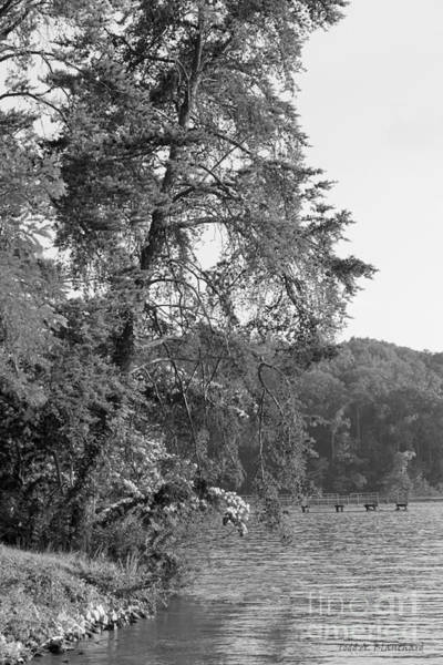 Photograph - Along The Riverbank by Todd Blanchard