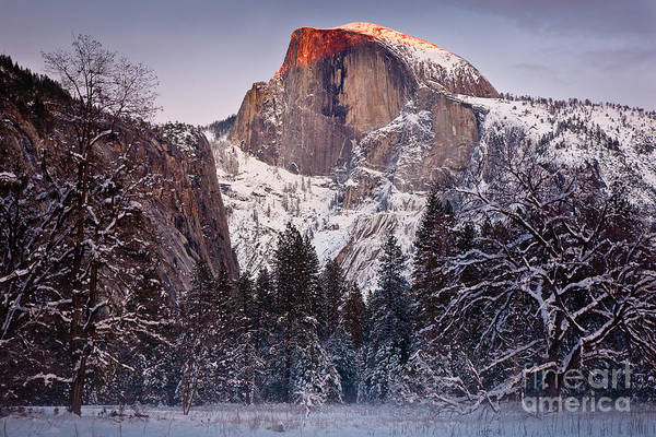 Photograph - Alpenglow On Half Dome by Susan Cole Kelly