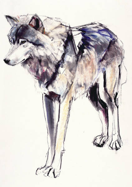 Canis Lupus Wall Art - Painting - Alpha by Mark Adlington