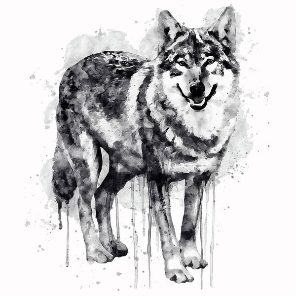 Alpha Wolf Wall Art - Painting - Alpha Wolf Black And White by Marian Voicu