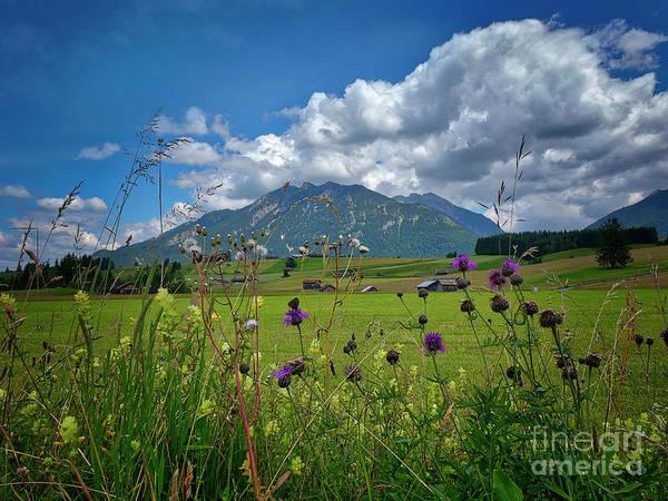 Photograph - Alpine Beauty by Edmund Nagele