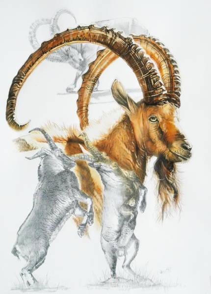 Mixed Media - Alpine Ibex by Barbara Keith