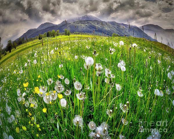 Photograph - Alpine Landscape by Edmund Nagele