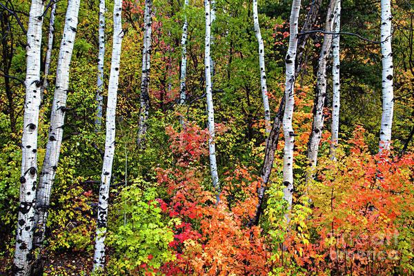 Photograph - Alpine Loop Utah by David Millenheft
