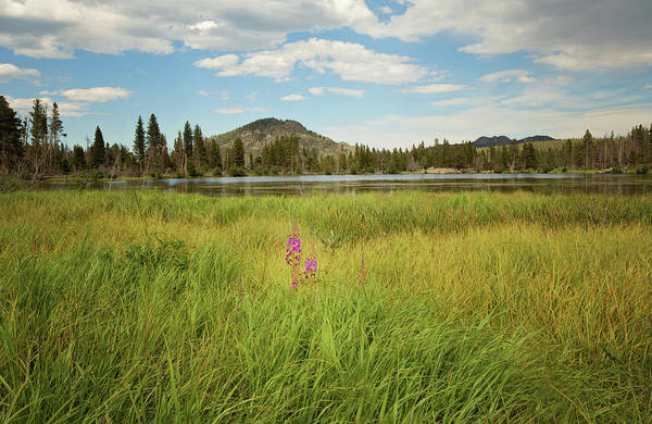 Photograph - Alpine Meadow by Sue Collura