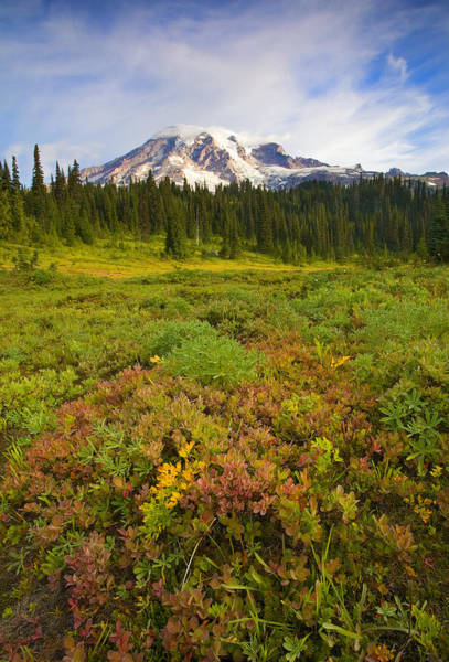 Mt Rainier Photograph - Alpine Meadows by Mike  Dawson