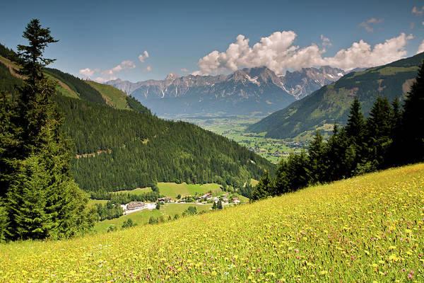 Photograph - Alpine Meadows With Wildflowers by Aivar Mikko