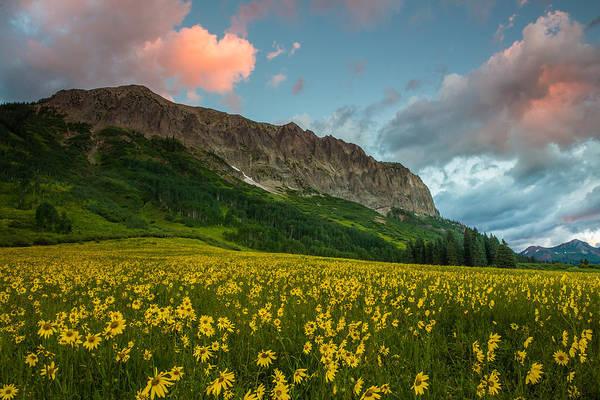 Wall Art - Photograph - Alpine Sunflowers Arise Below Gothic Mountain At Dawn by Bridget Calip