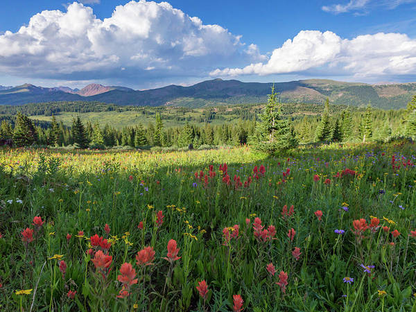 Alpine Meadows Photograph - Alpine Wildflowers In A High Meadow In The Rocky Mountains Of Co by Bridget Calip