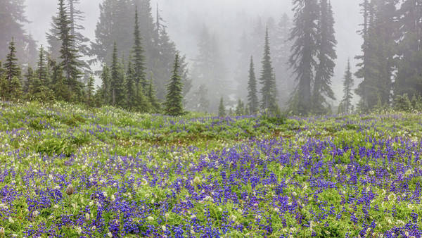 Photograph - Alpine Wildflowers In The Fog by Pierre Leclerc Photography