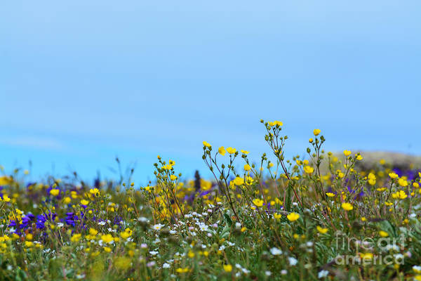 Art Print featuring the photograph Alpine Wildflowers by Kate Avery