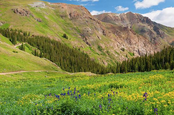 Photograph - Alpine Wildflowers by Steve Stuller