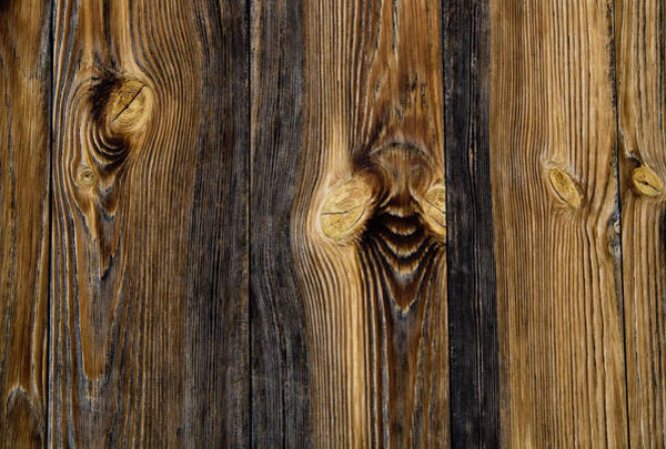 Wall Art - Photograph - Alpine Wood by Frank Tschakert