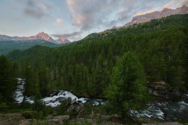 Wall Art - Photograph - Alps Forest by Jon Glaser
