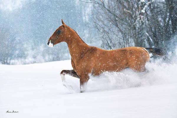 Horse Love Photograph - Altynylduz #4 by Artur Baboev