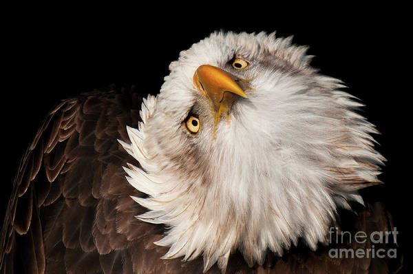 Photograph - Always Alert by Eyeshine Photography