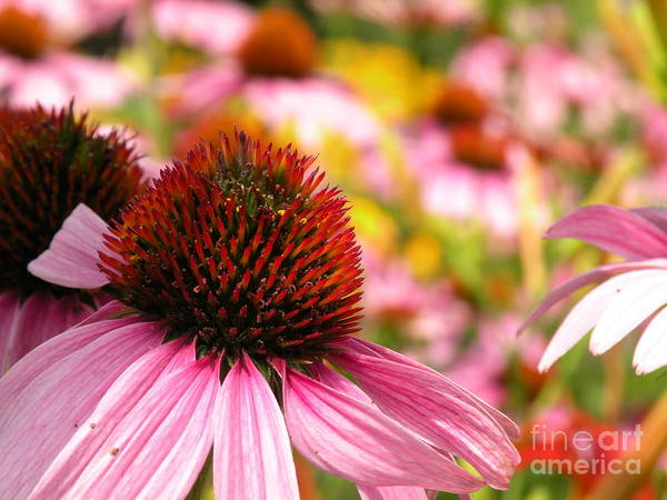 Amana Wall Art - Photograph - Amana Colonies' Garden by Christine Belt