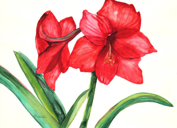 Red Amaryllis Painting - Amarillis by Patricia Allingham Carlson