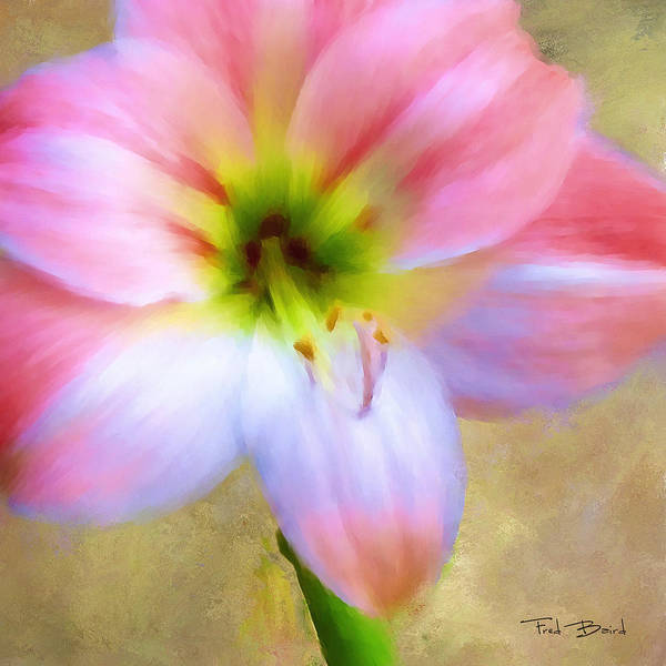 Amaryllis Painting - Amaryllis by Fred Baird