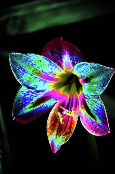 Mixed Media - Amaryllis In Neon by Lesa Fine