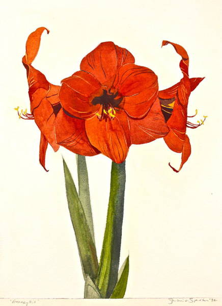 Painting - Amaryllis- Posthumously Presented Paintings Of Sachi Spohn  by Cliff Spohn