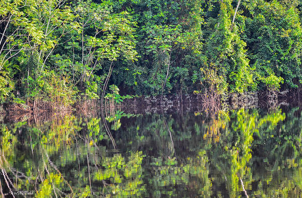 Photograph - Amazon Reflections 4 by Allen Sheffield