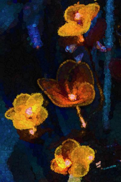 Photograph - Amber Light by Paul Wear