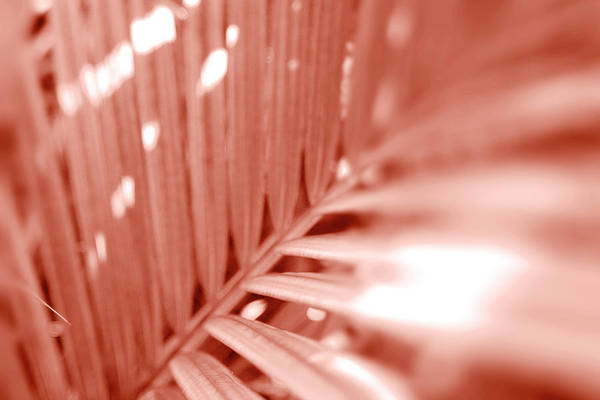 Botanica Photograph - Amber Palm Frond by Sean Davey