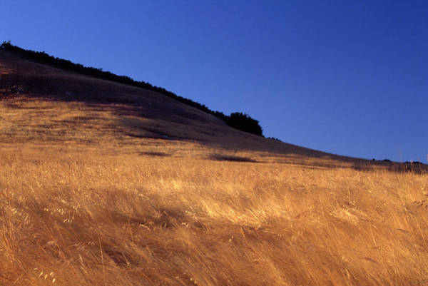 Wall Art - Photograph - Amber Waves - Montgomery Potrero by Soli Deo Gloria Wilderness And Wildlife Photography
