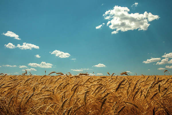 Photograph - Amber Waves Of Grain by Todd Klassy