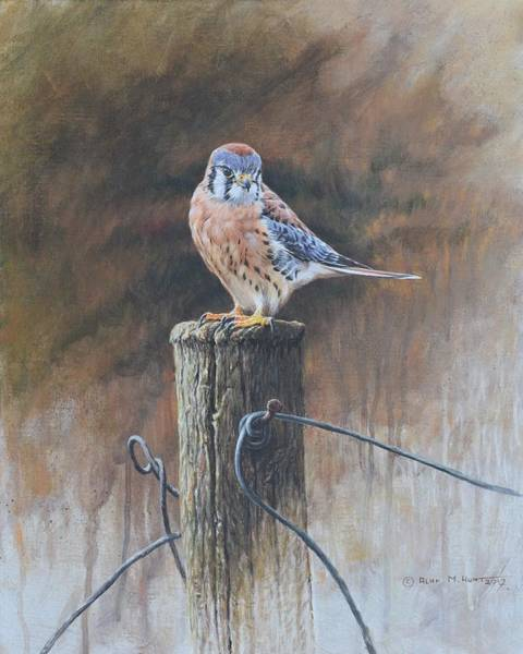 Painting - American Kestrel by Alan M Hunt