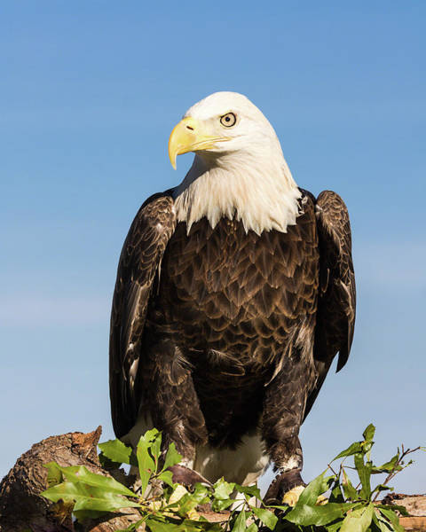 American Ambassador Photograph By Dawn Currie