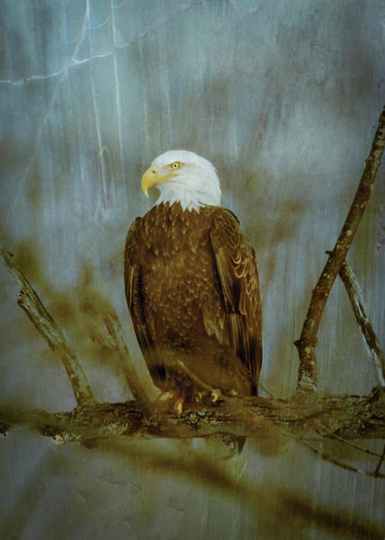 Photograph - American Bald Eagle Storm by Patti Deters