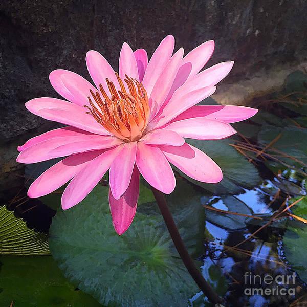 Photograph - Full Bloom by LeeAnn Kendall