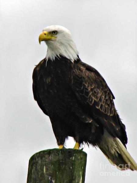Wall Art - Photograph - American  Bird by Robert Bales