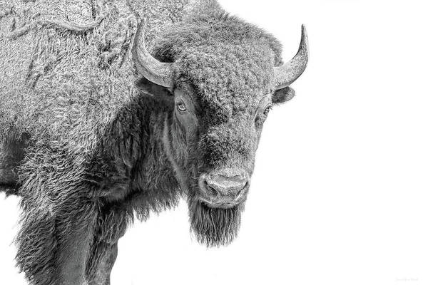Wall Art - Photograph - American Bison Black And White by Jennie Marie Schell