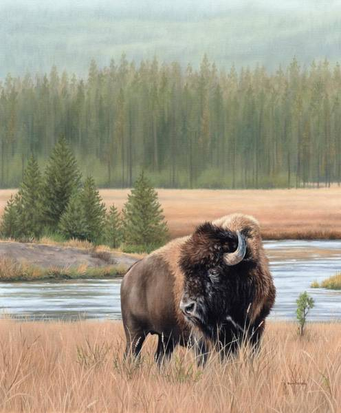 North American Wildlife Wall Art - Painting - American Bison Oil Painting by Rachel Stribbling