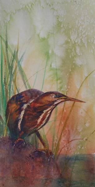 Painting - American Bittern by Ruth Kamenev
