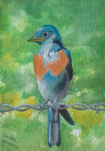 Wall Art - Painting - American Blue Bird by Cynthia Schumann