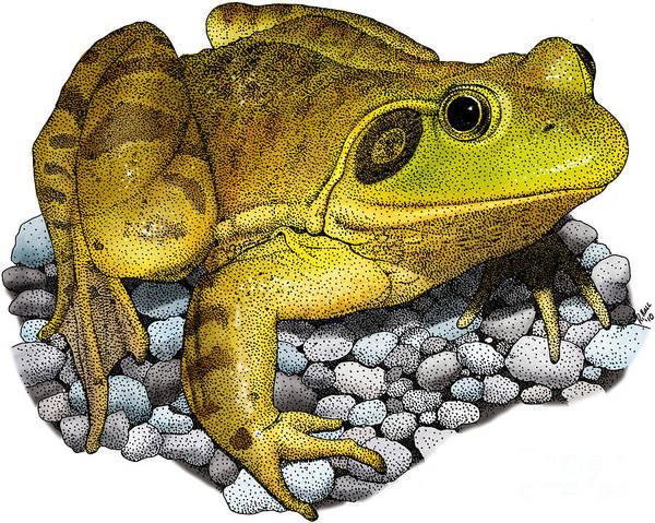 Bull Frog Photograph - American Bullfrog by Roger Hall