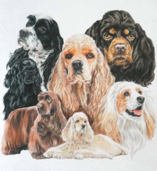 Wall Art - Drawing - American Cocker Spaniel by Barbara Keith
