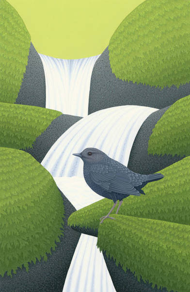 Wall Art - Painting - American Dipper by Nathan Marcy