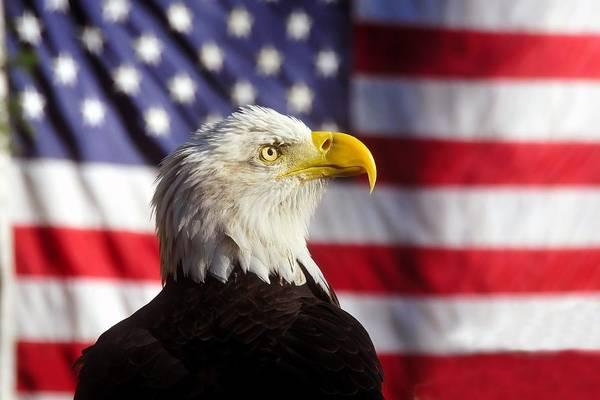 Pride Photograph - American Eagle by David Lee Thompson