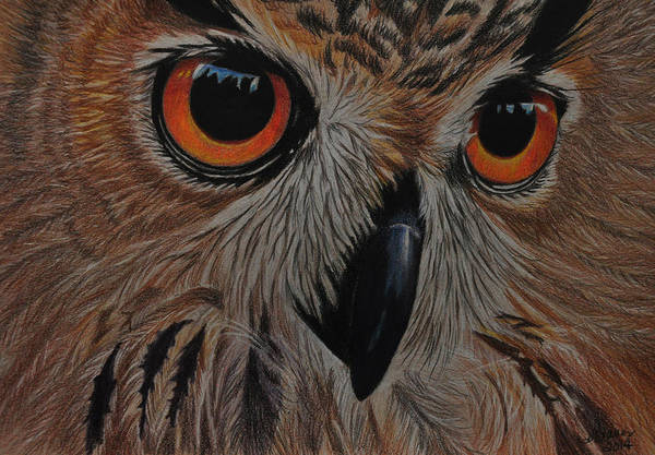 Drawing - American Eagle Owl by Jo Baner