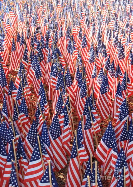 Photograph - American Flags In Tampa by Carol Groenen