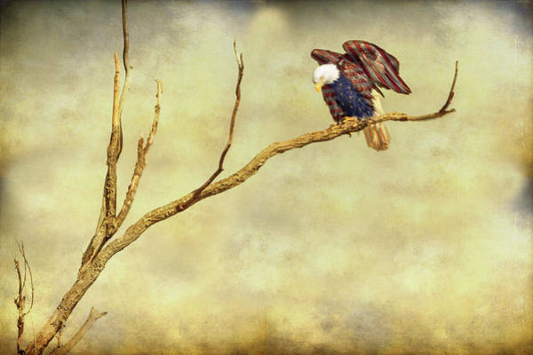 Wall Art - Photograph - American Freedom by James BO Insogna