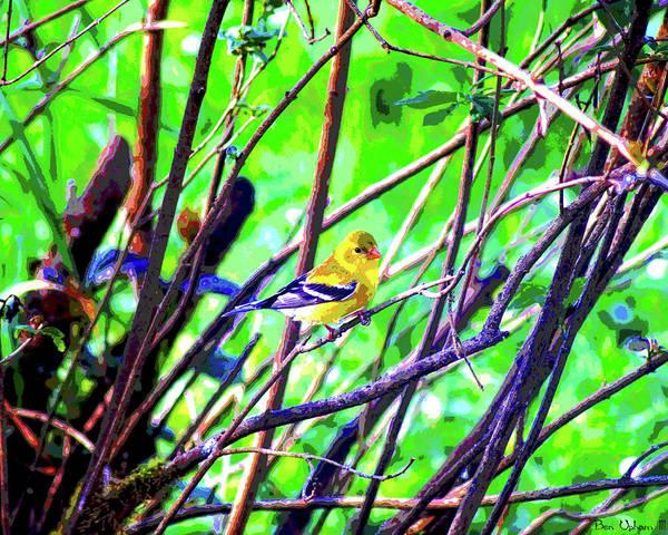 Photograph - American Goldfinch #1 Crop 2 Enhanced by Ben Upham III
