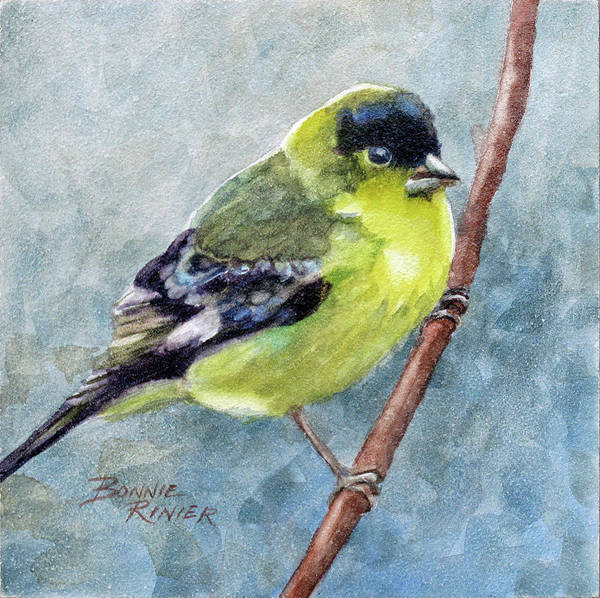 Goldfinch Wall Art - Painting - American Goldfinch by Bonnie Rinier