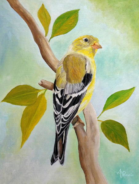Painting - Pretty American Goldfinch by Angeles M Pomata