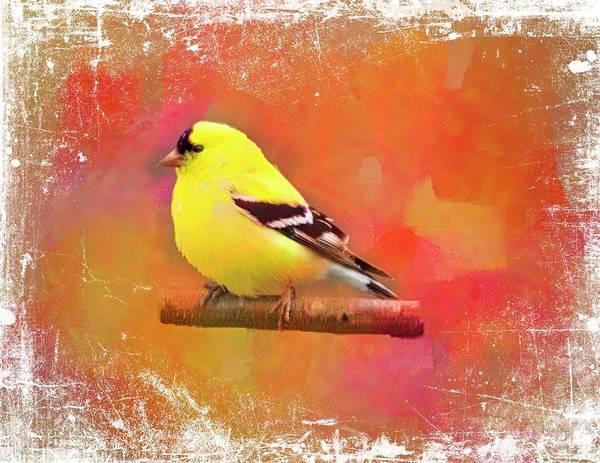 Digital Art - American Goldfinch by Rusty R Smith